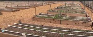 d-i-y pvc garden irrigation