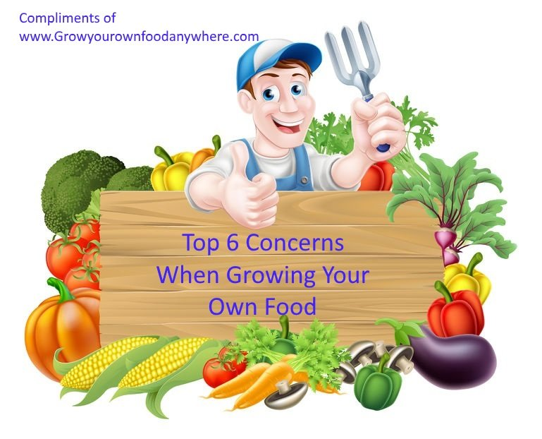 Top 6 Concerns When Growing Your Own Food