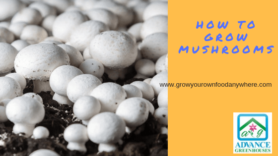 How To Grow Mushrooms - Grow Your Own Food Anywhere