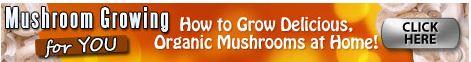 mushroom growing