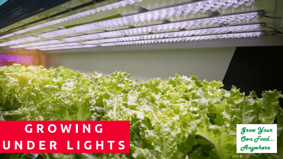 Growing with Grow Lights