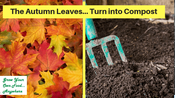 Turn Your Autumn Leaves into Compost