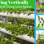 Growing Veggies Vertically