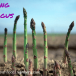 Growing asparagus plants