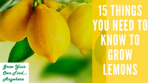 15 things you need to know to grow lemons