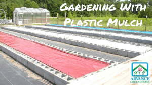 gardening with plastic mulch