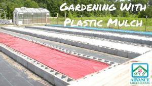 gardening with plastic mulch