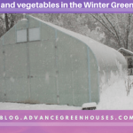 Herbs and Vegetables in the Winter Greenhouse
