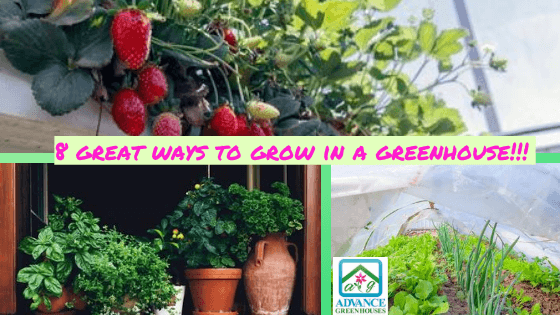 8 great ways to grow in your greenhouse
