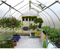 Growing Plants in containers in greenhouse