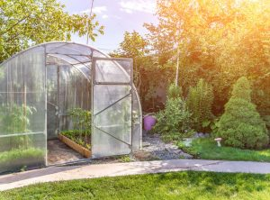 Greenhouse with Tomato Plants in raised beds